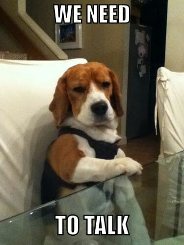 Best Beagle & Food Memes of All Time